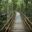 Boardwalk in forest. — Stock Photo