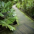 Path in rainforest. - Stock fotografie