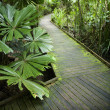 Path in rainforest. - Photo