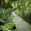 Постер, плакат: Walkway in rainforest