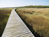 Boardwalk at marsh. — Stock Photo