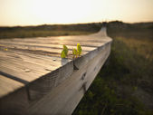 Coastal boardwalk. — Stock Photo