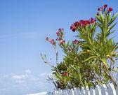 Flowering plants. — Stock Photo