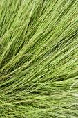 Long green grass. — Stock Photo