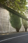 Ivy on roadside wall. — Stock Photo