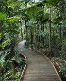Boardwalk in rainforest. — Stock Photo