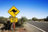 Kanguru crossing avustralya — Stok fotoğraf