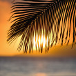 Stock Photo: Palm leaf at sunset.