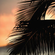 Stock Photo: Palm frond silhouette.