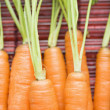 Carrot close up. — Stock Photo
