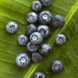 Stock Photo: Blueberries.