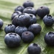 Blueberry fruit. — Stock Photo