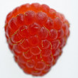 One red raspberry. — Stock fotografie