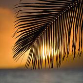 Palm frond sunset. — Stock Photo