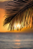 Palm leaf at sunset. — Stock Photo