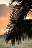 Palm frond silhouette. — Stock Photo