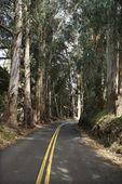 Scenic road. — Stock Photo