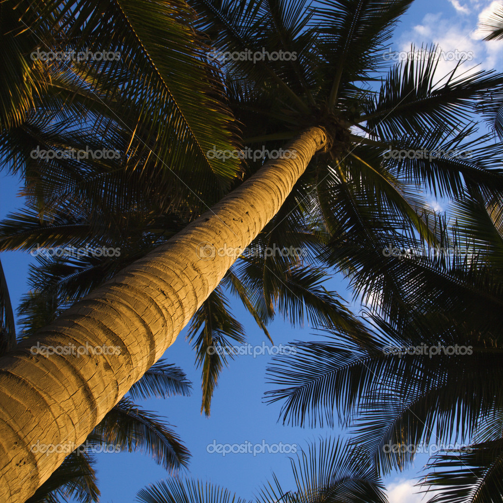 Low angle view of palm tree. — Stock Photo #9280631