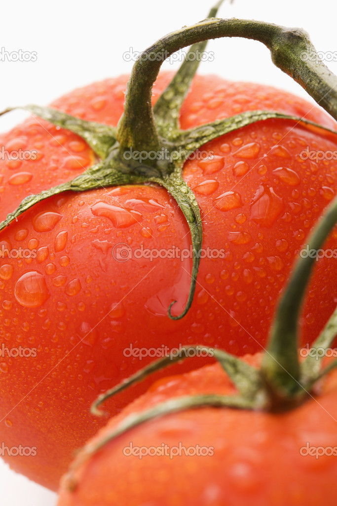 Close up of wet red ripe tomatoes against white background.  Stock Photo #9280946
