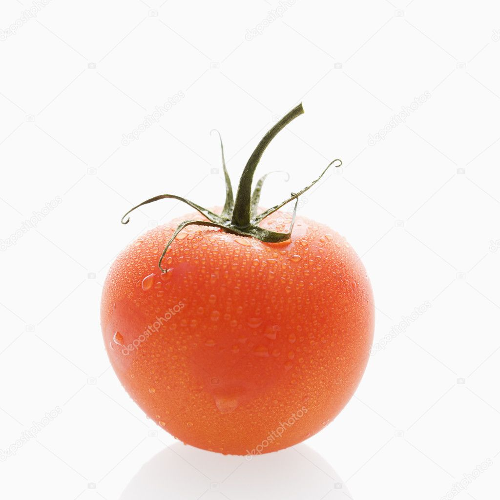 Still life of wet red ripe tomato against white background. — Stock Photo #9280966