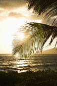Sunset with coastal palm. — Stock Photo