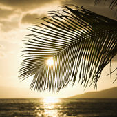 Sun setting with palm. — Stock Photo