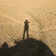 Human shadow on crop. - Stock Photo