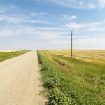Dirt road and farmland. — Stock Photo