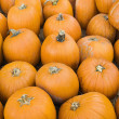 Stock Photo: Group of pumpkins.