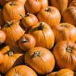 Stock Photo: Pile of pumpkins.