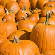 Stock Photo: Pumpkins at market.
