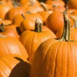 Group of pumpkins. - Stock Photo