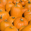 Stock Photo: Fall pumpkins.
