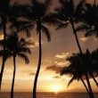 Maui palm trees at sunset. - Stock Photo
