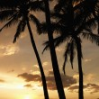 Palm trees at sunset — Stock Photo