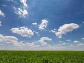 Agricultural field. — Stock Photo