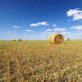 Hay bales in field. — Stock Photo