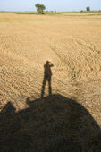 Human shadow on crop. — Stock Photo
