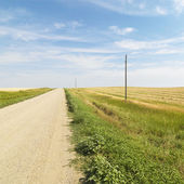 Dirt road and farmland. — Stock Photo