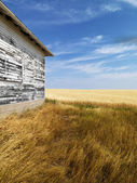Building and grassland. — Stock Photo