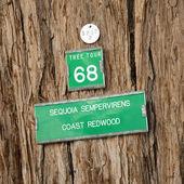 Redwood tree sign — Stock Photo