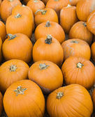 Group of pumpkins. — Stock Photo