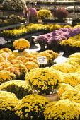 Fall flowers. — Stock Photo