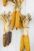 Fall corn decorations. — Stock Photo