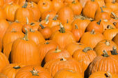 Autumn pumpkins. — Stock Photo