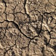Cracked Mud — Stock Photo #9310714