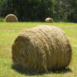 Hay bale on grass - Stock Photo