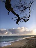 Maui Hawaii beach with branch — Stock Photo