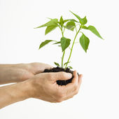 Hands holding plant. — Stock Photo