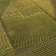 Stock Photo: Aerial of crops.